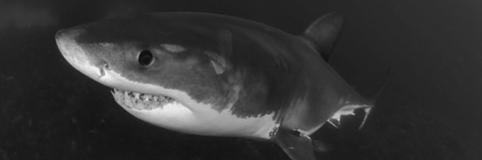 Katharina Mühlenberg | Das Team der red sharks